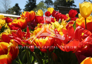 Canberra is awash with colour during Floriade.