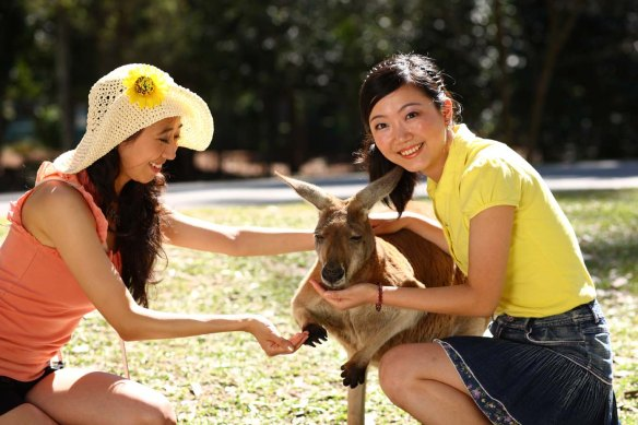 Get up close and personal with the animals at Australia Zoo.