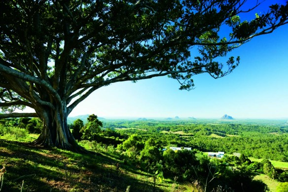 Discover beautiful sub-tropical rainforest and Mary Cairncross Reserve.