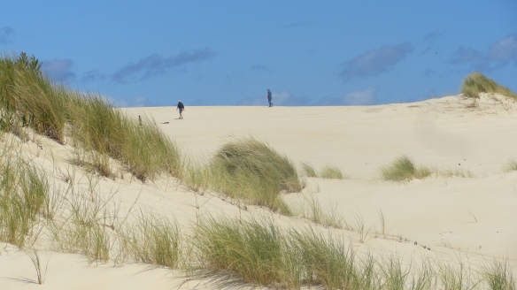 It's hard on the legs, but the scenery at the Henty Sand-dunes is worth it.